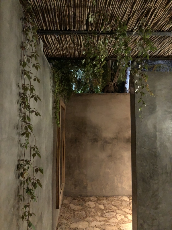 decor in bathroom, hanging vines, beautiful architecture
