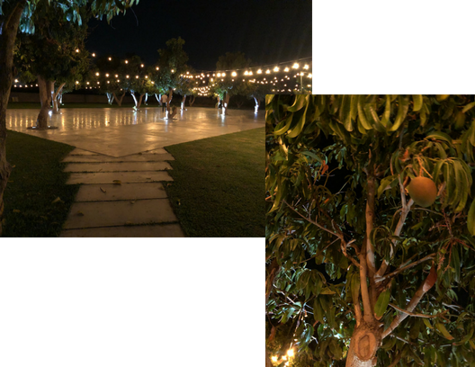 Trees, events, galas, parties, mangos